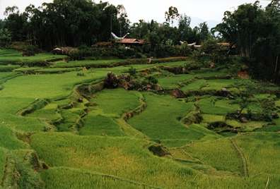 rice terraces-Torajaland