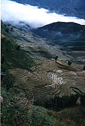 rice terraces-Sapa